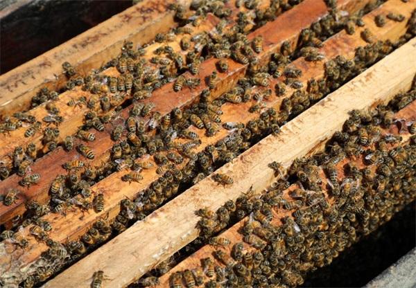 女人喝蜂王浆的好处