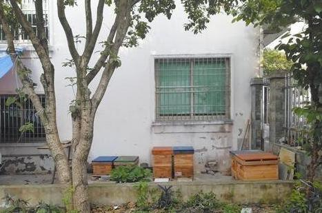 幼儿园边上好几个蜂箱