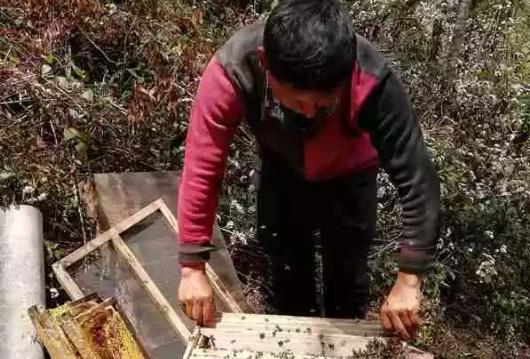 大山里的养蜂人