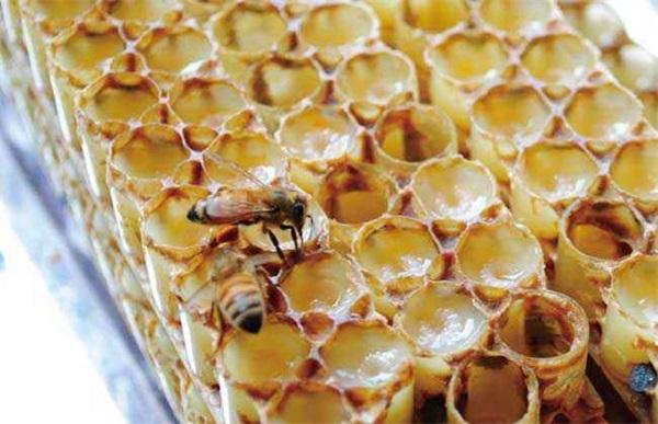 化疗能吃蜂王浆吗