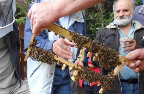 培育优质蜜蜂