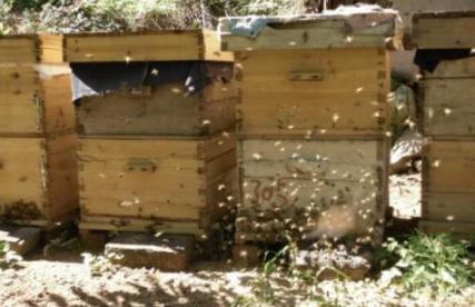 蜜蜂安家居民区