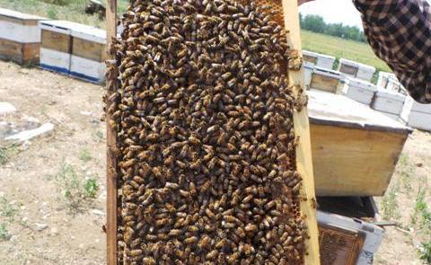 """养蜂酿出脱贫致富""""蜜"""""""