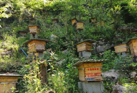 """养蜂""""达人""""现场授技"""