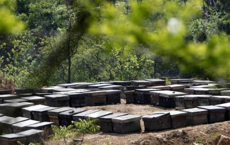 林间养蜜蜂