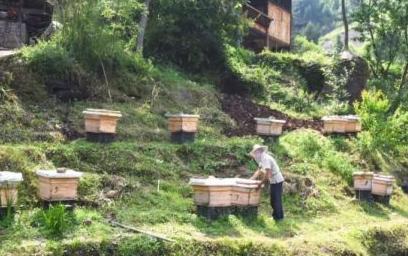 """养蜂产业酿造村民""""甜蜜""""生活"""