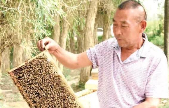 若羌枣林深处养蜂人