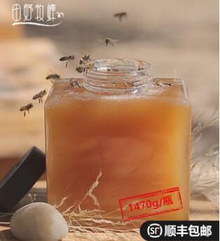田野牧蜂 阿勒泰蜜 高活性蜂蜜 苏先生的蜜 1470g
