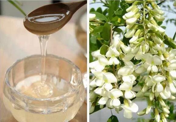 喝槐花蜜的好处?槐花蜜里有什么营养?